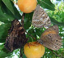 Something Fruity  by Eric Kempson