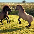 Jumping Konik Horses by Jo Nijenhuis