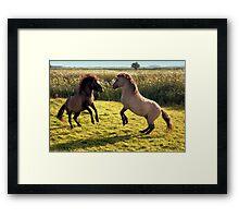 Jumping Konik Horses Framed Print