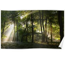 Morning Woodlands Poster