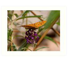 Fluttering Fritillary Art Print