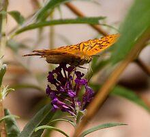 Fluttering Fritillary by Alex  Motley