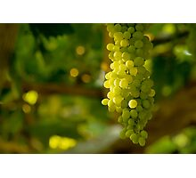 A Bunch Of White Grapes Photographic Print