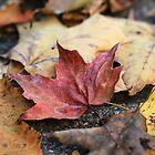 As They Fall by Lynn Gedeon