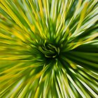 Grass Tree by Mossrocket