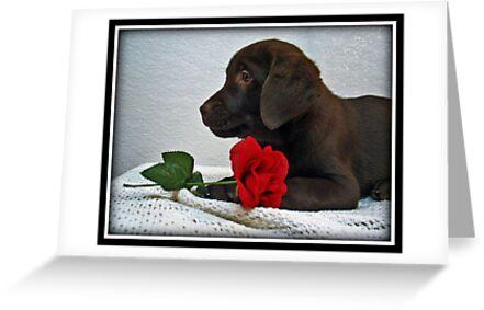 Be my Valentine! by DennisThornton