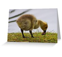 gosling 1 worm 0 Greeting Card