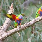 Parrots on a Branch by Stuart Daddow Photography