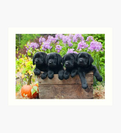 A box of 4 Labrador puppies! Art Print