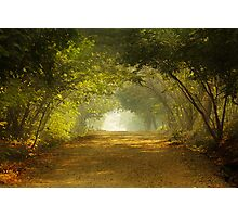 Come, walk with me!!! Photographic Print
