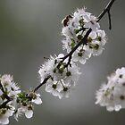 Bee-uatiful by Stuart Daddow Photography