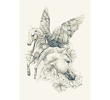 Pegasi Photographic Print