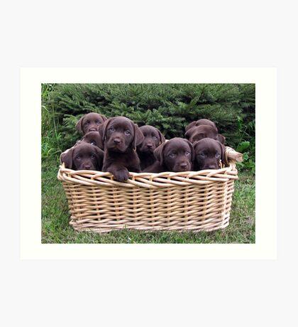 A basket of Chocolates! Art Print