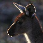 Mt. Lofty Kangaroos Pt.3 by Stuart Daddow Photography