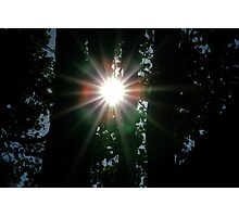 Sun Through the Trees Photographic Print