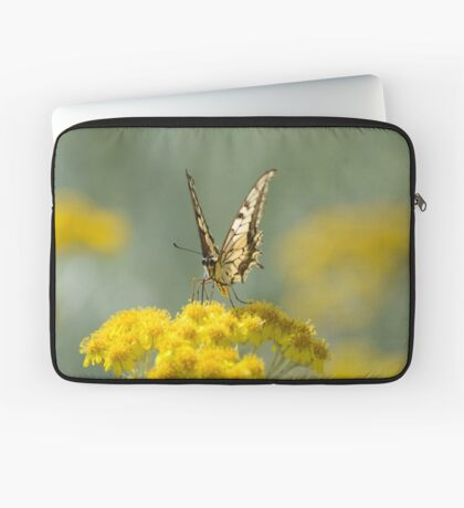 Old World Swallowtail (Papilio machaon) Butterfly Laptop Sleeve