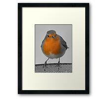 Robin [SC ] Framed Print