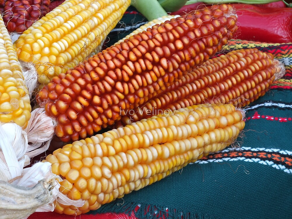 Corn over the table by Ivo Velinov