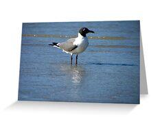 bird at daytona Greeting Card