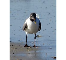 bird at daytona 2 Photographic Print