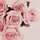 roses by Carina Potts