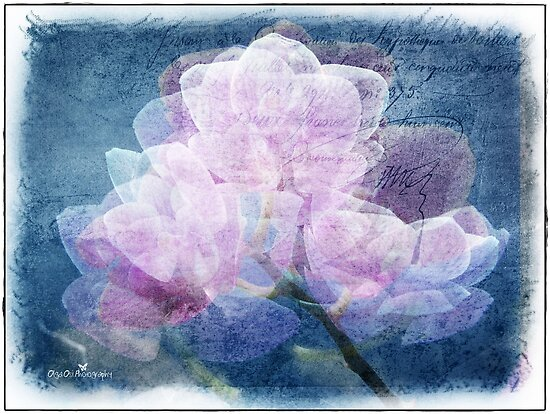 Orchid dimensions  by Olga