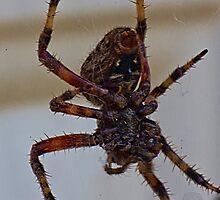 Spider Patrol by daveknowshow