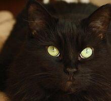 Emerald Eyes by EmilyMyles