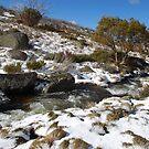 Snowy River by Catherine Davis