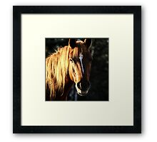 Golden Horse Portrait Photo Framed Print