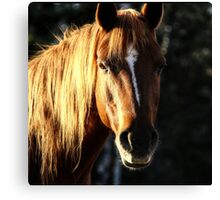 Golden Horse Portrait Photo Canvas Print