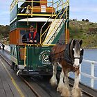 Granite Island Horse Tram by Stuart Daddow Photography