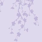 Lavender Cherry Blossoms by Jeffery Borchert