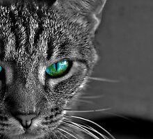 dragon eyes by Cara Merino
