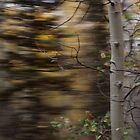 Spin About the Tree... by rjcolby