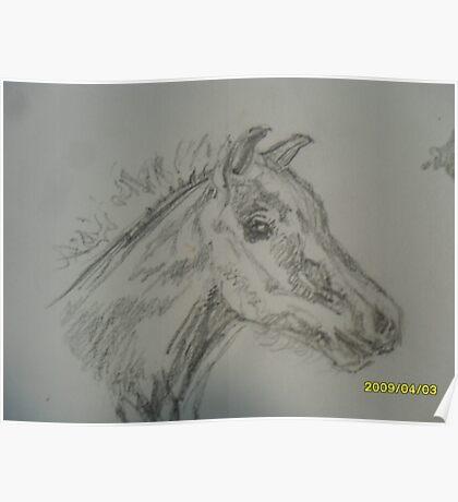 Froliking foal Poster