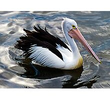 Pelican, Port Hacking, Sydney, NSW, Australia. Photographic Print
