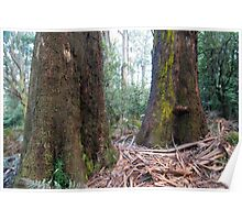 Rain forest Dandenongs Poster