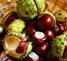Horse Chestnut by karina5