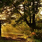 Autumn Light by Jim Wilson