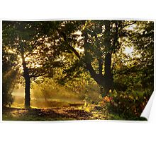 Autumn Light Poster