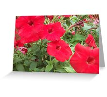 Four Red Flowers Greeting Card