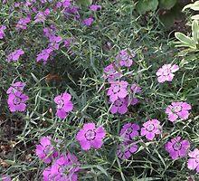 Purple Flowers in the Grass by Lunatasha