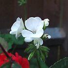 White Flower by Lunatasha