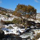 Snowy river and tree by Catherine Davis