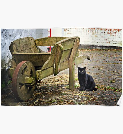 Farmyard Cat Poster