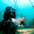 Diver with Lionfish by allyazza