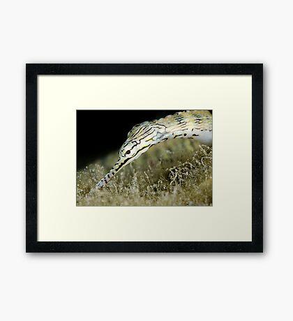 Pipefish Framed Print