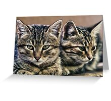 mother and child wild cats Greeting Card