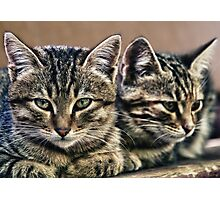 mother and child wild cats Photographic Print